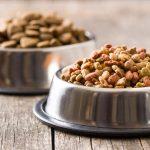 Jak wybrać karmę dla psów z alergią?