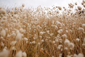 Zalety bawełny organicznej – dlaczego warto w nią zainwestować?